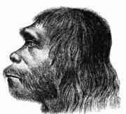 180px-Neanderthaler_Fund.jpg