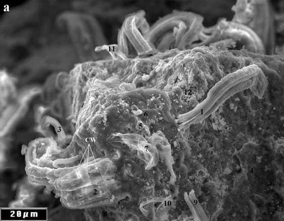 meteorite-bacteria-a.jpg