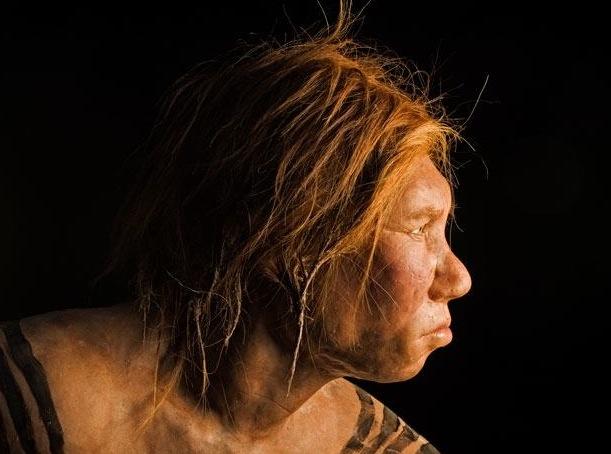 Neander-profile-714.jpg