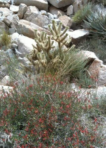 little red desert flowers.jpg