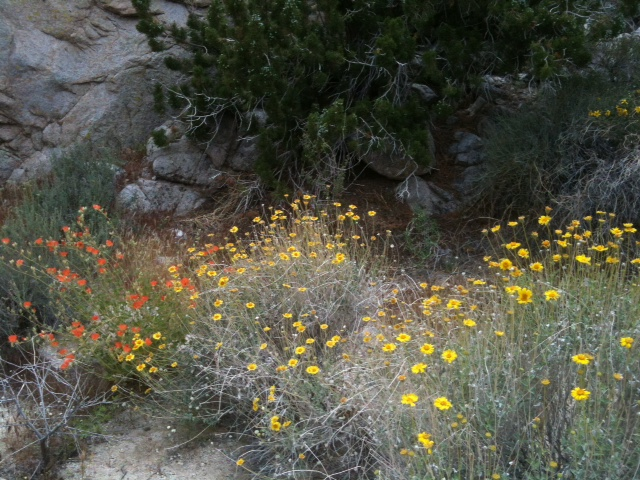 desert flowers at Morteros.jpg
