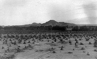 325px-Navajo_cornfield.jpg