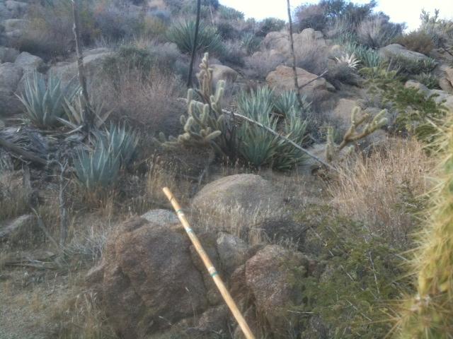 Desert rest stop.jpg